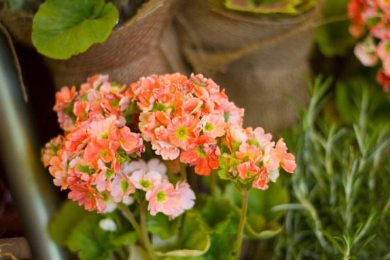 IMG_1633 Welcoming Spring Welcoming Spring IMG 1633